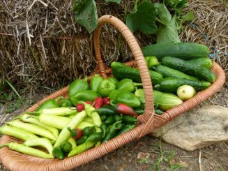 sb last harvest 1