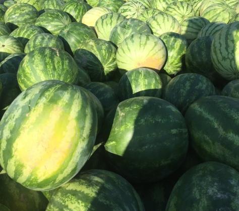 hardinwatermelons
